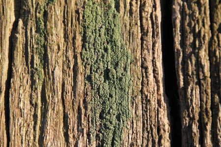 undisturbed: Moss on Wood