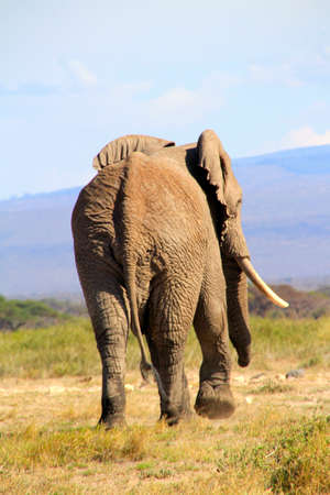 northern african: Bye Bye Elephant