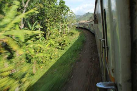 Grande vitesse � travers la jungle