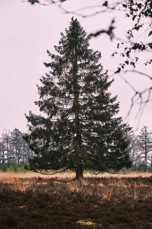 Lonely pine tree in a field in classic negative colors