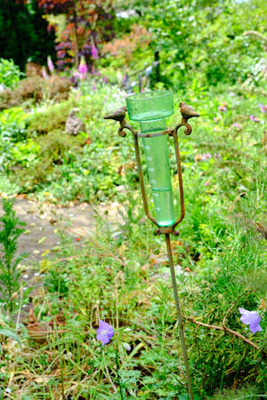 Rain gauge filled with water after rain in garden with selective focus. Water measurement in the garden. The Netherlands. Finally rain