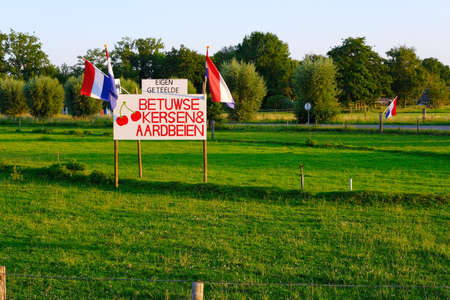 Dutch sign that says:'Home grown cherries and strawberries for sale, from Betuwe Holland'. For sale sign in grassland with dutch flags, on sunset, on sunset