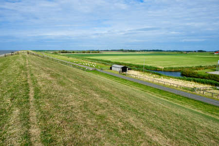 Typical dutch view of a dike with sheeps overlooking the polder with farms, green grassland and the Wadden sea. Sedyk, Friesland, Harlingen, The Netherlands.