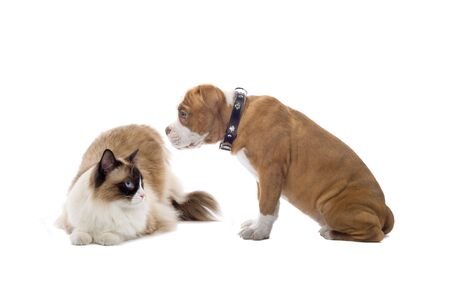 cat and dog isolated on white Stock Photo - 6764117