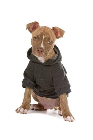 nariz roja: vestidos cachorro de nariz roja de camisa de ina mirando c�mara