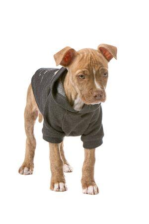 nariz roja: Cachorro de nariz roja cute