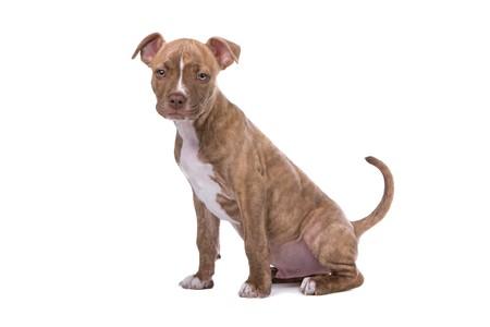 nariz roja: Cachorro de nariz roja cute mirando c�mara