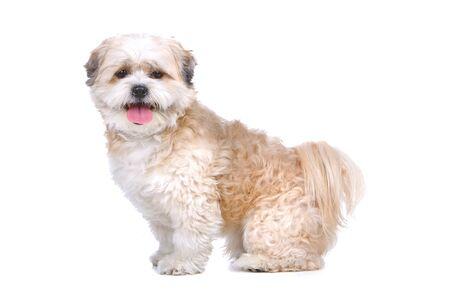 boomer: mixed breed dog (boomer) looking at camera Stock Photo