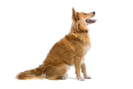 sitting dog: side view of mixed breed dog sitting