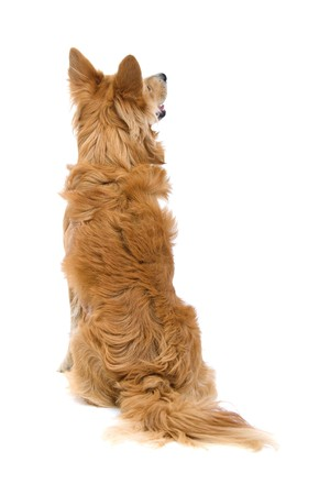 back view of a mixed breed dog isolated on a white background Zdjęcie Seryjne - 7218229