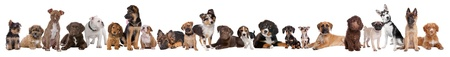 22 puppy dogs in a row in front of a white background photo