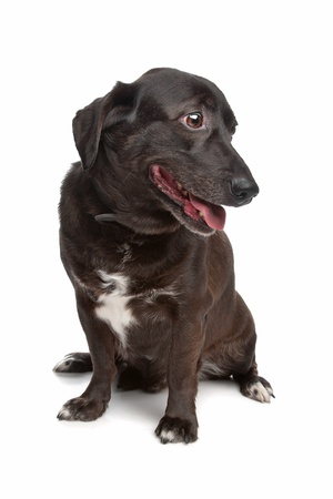 pure bred: mixed breed dog in front of a white background