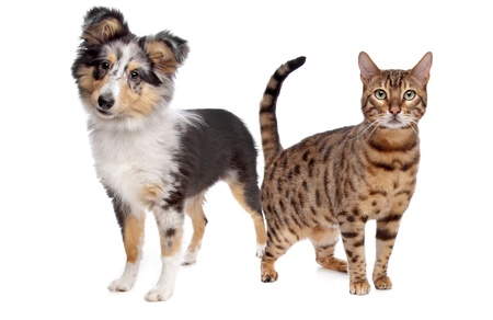 Dog and cat in front of a white background Imagens