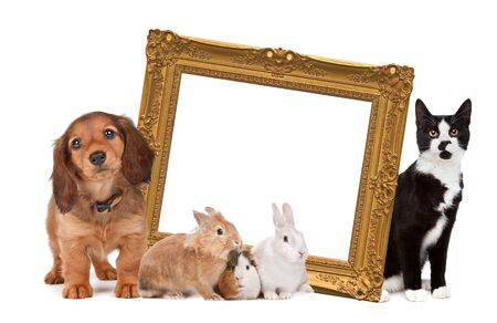 group of pets standing around a golden picture frame in front of a white background photo