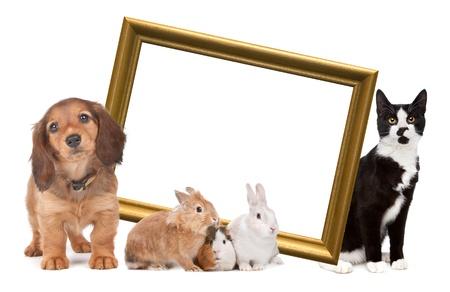 wit konijn: groep van huisdieren staan rond een gouden fotolijstje in de voorkant van een witte achtergrond