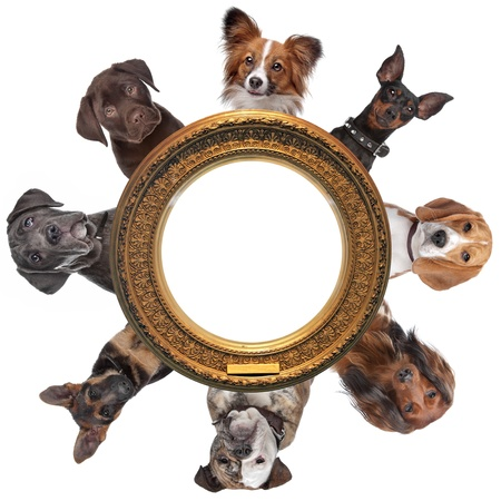 group picture: a group of dog portraits around a round golden picture frame in front of a white background