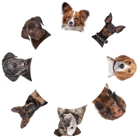 group of dog portraits around a circle. with clipping path photo