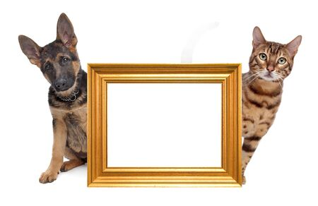 Cat and dog side to side. in the middle an empty golden picture frame