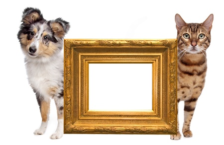 Cat and dog side to side. in the middle an empty golden picture frame photo