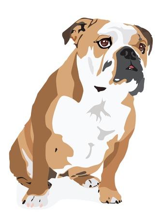 dogo: Vector de un Bulldog Inglés aislado en un fondo blanco