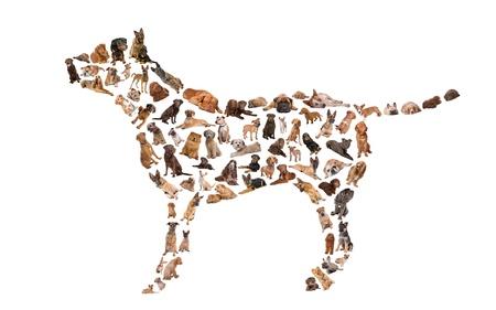 cane chihuahua: Silhouette di un cane fatto con le foto del cane