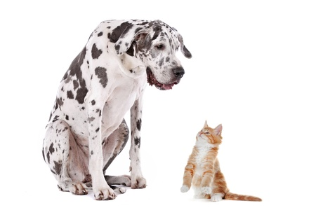 A dog and a cat in front of a white background