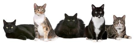 흰색 배경 앞의 고양이의 그룹