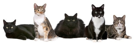 Group of cats in front of a white background photo