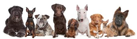rows: Groep van honden Stockfoto