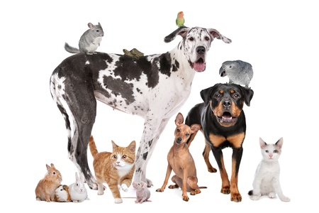 Group of Dogs, cats, birds,mammals and reptiles in front of a white background photo