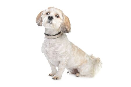 boomer: boomer dog in front of a white background