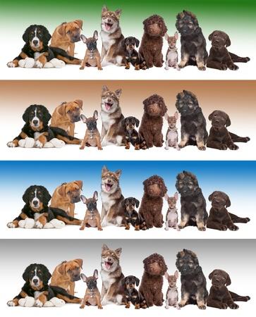 pack animal: Grande gruppo di cuccioli di fronte a diversi sfondi sfumati