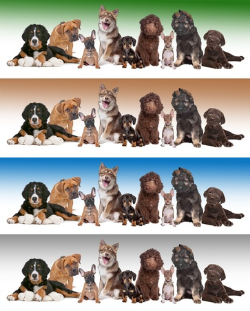 Large group of puppies in front of diverse gradient backgrounds photo