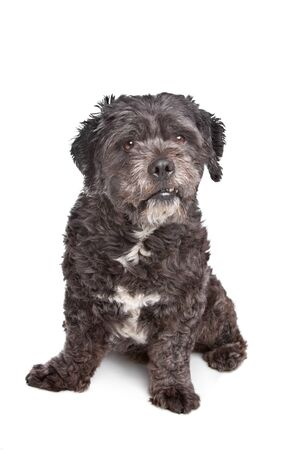 boomer: Boomer dog in front of a white background Stock Photo