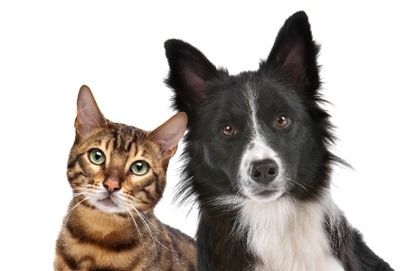 animals together: Close up portrait of dog and cat in front of white background