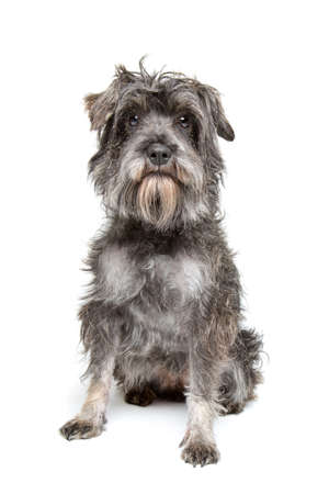 breed: mixed breed dog sitting in front of a white background