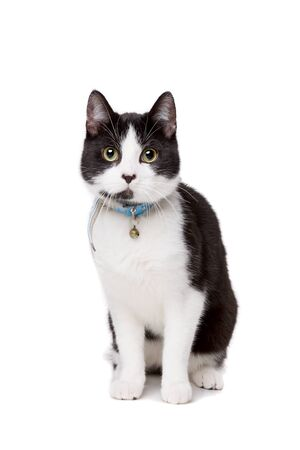 black and white short haired cat in front of a white background Stock Photo