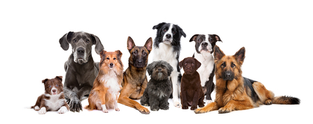 Group of nine dogs in front of a white background