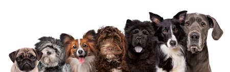 seven different dog breed portraits looking at the camera isolated on a white background