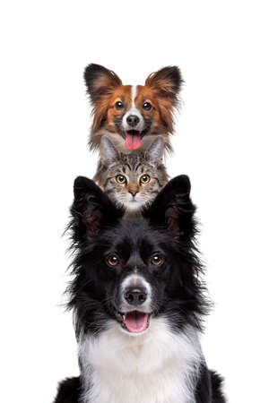 Portrait of two dogs and one cat piled up vertically isolated on a white background