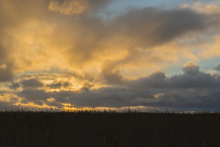 panicle: sunset at reed meadow Stock Photo