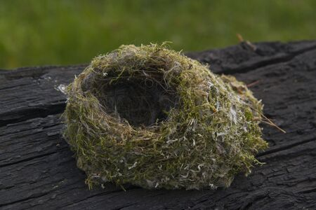 bird nest: Small bird nest