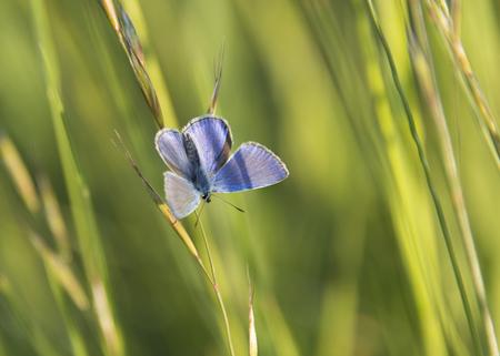 sripes: blue butterfly on grass