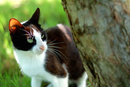 black and white cat near the tree. background is green - grass. photo