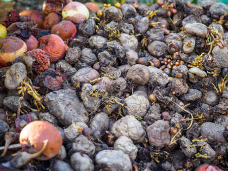 putrefied: Photo of rotting fruit and vegetables close-up, decaying fruit macro view