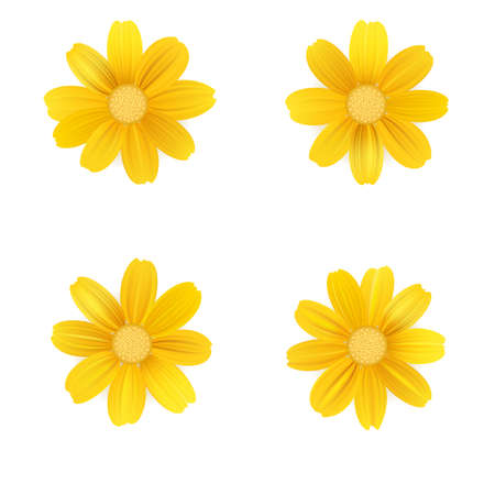 Set of isolated yellow gerbera or daisy. Vector colorful flowers on white background. Template for for t-shirt, fashion, prints and other design.