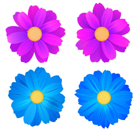 Set of isolated buds of flowers, blue and purple gerbera. Vector colorful flowers on white background. Template for for t-shirt, fashion, prints and other design. Illustration