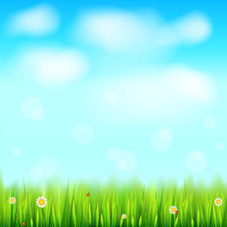 Summer landscape, green, natural grass with white daisies, camomile flower and small red ladybug. Blue sky, white clouds in the summer sky. Template for your design or creativity.