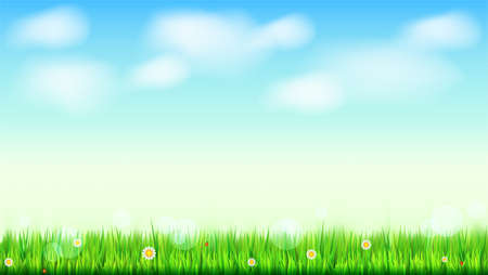 Summer landscape background, green, natural grass border with white daisies, camomile flower and small red ladybug. Blue sky, white clouds in the summer sky. Template for your design or creativity. Illustration