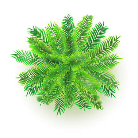 Green palm tree. Vector 3D illustration isolated on white background. Top view on branches of coconut tree Illustration